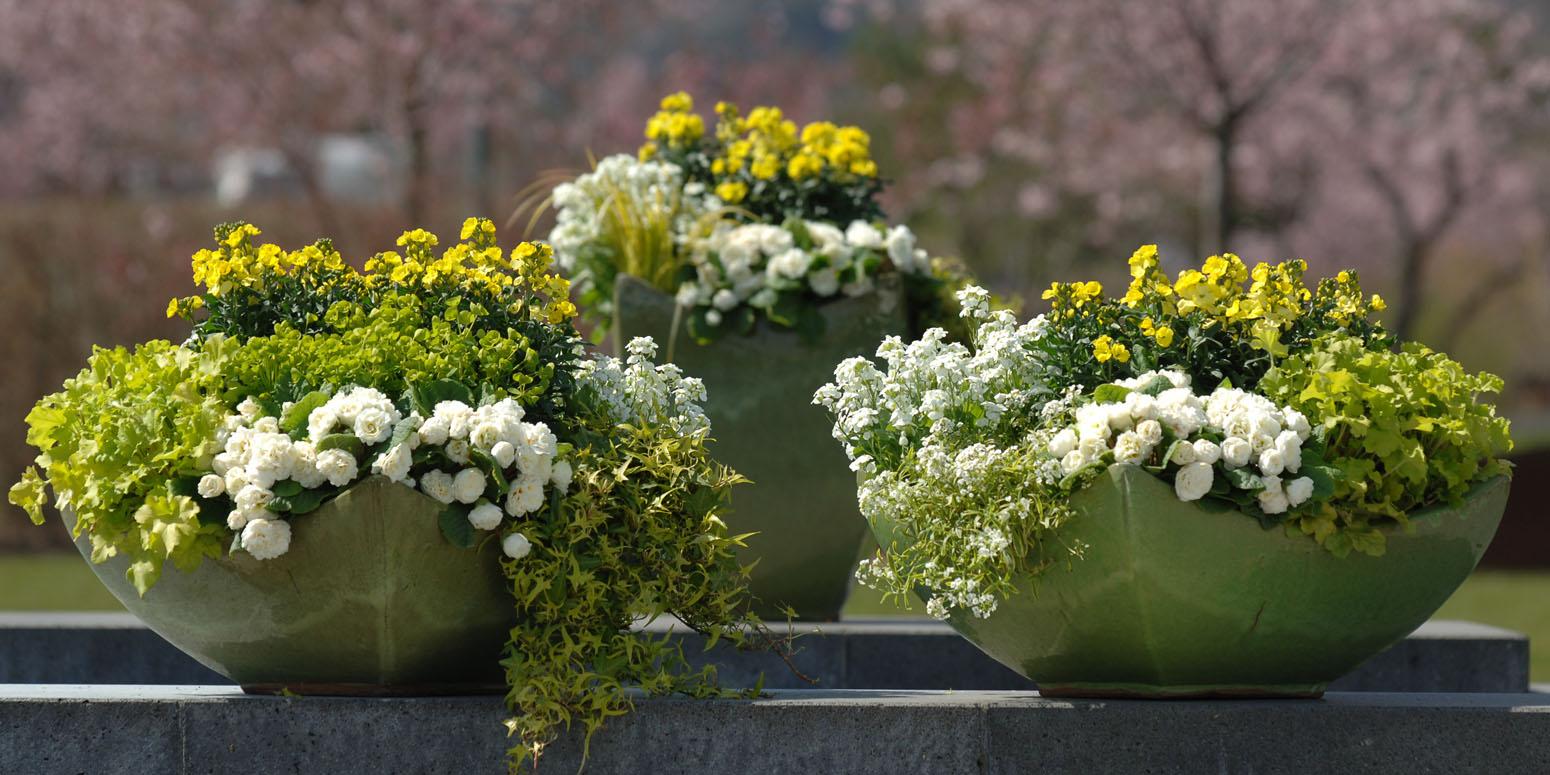 Garten ideen und pflanzen von kientzler - Gartenideen pflanzen ...